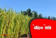 Photo of सेंद्रिय शेती म्हणजे काय? जाणून घ्या त्याचे फायदे